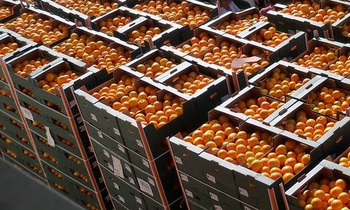 Naranjas en Cajas