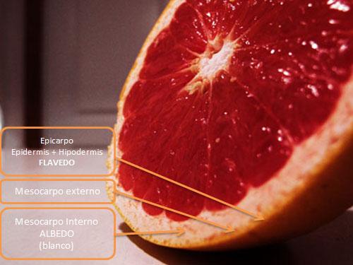 Partes de la Naranja - Flavedo y Albedo