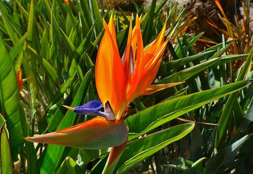 La Flor Ave del Paraíso
